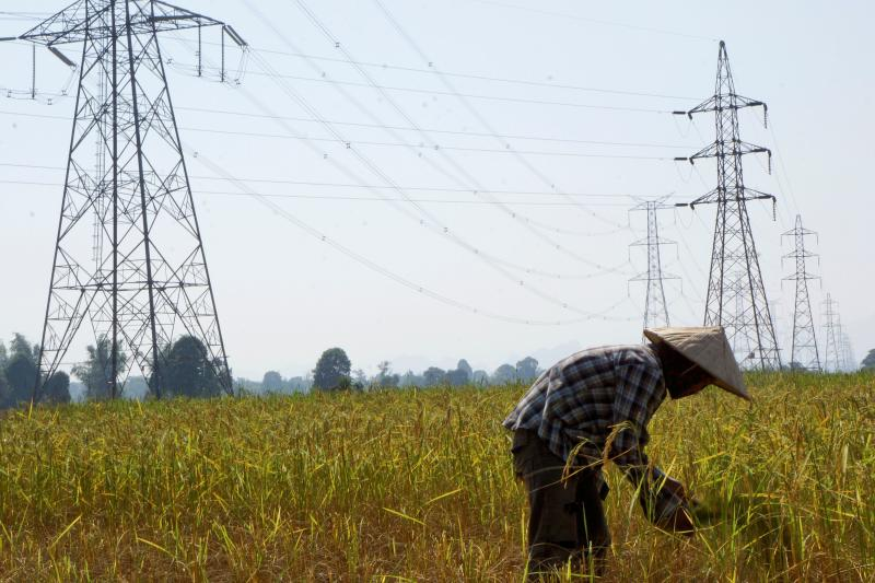A Lao farmer works in a paddy field under the power lines near Nam Theun 2 dam in Khammouane province on Oct 28, 2013. (Reuters file photo)