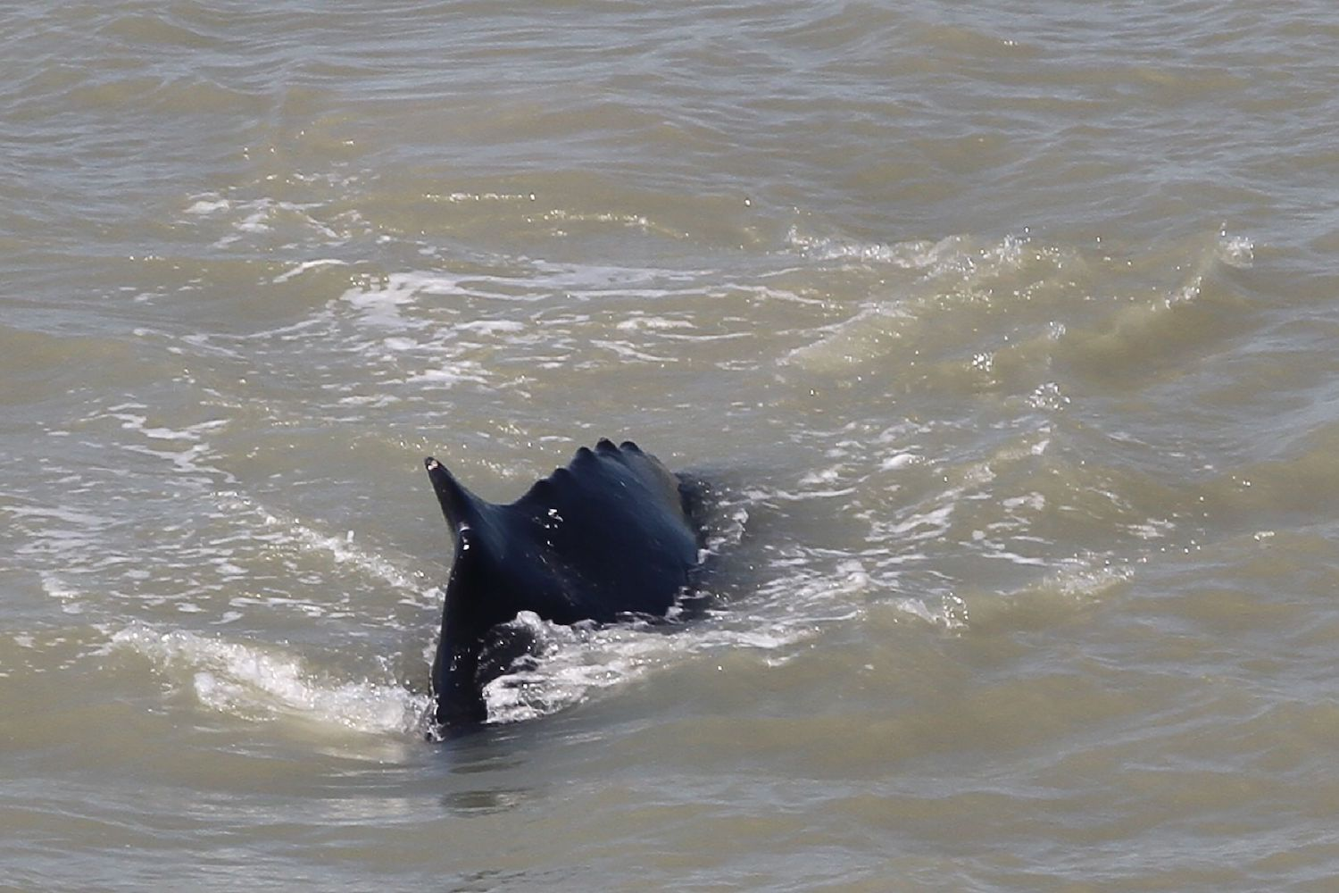 Humpback Whales Stray Into Tropical Aussie River