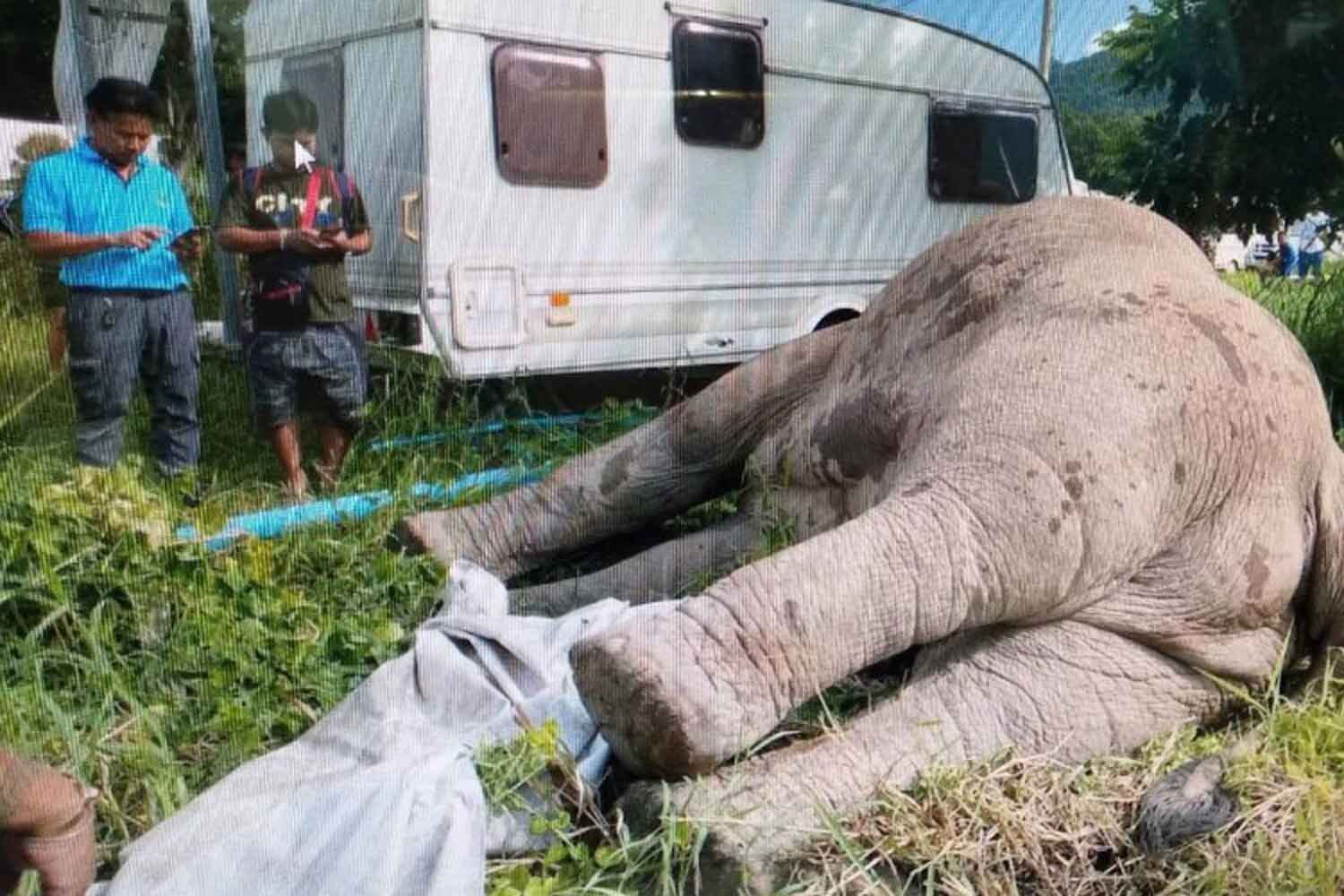 The dead bull elephant, found elecrocuted at the Caravans Club Thailand resort in Pak Chong district, Nakhon Ratchasima, on Wednesday morning. (Photo supplied)