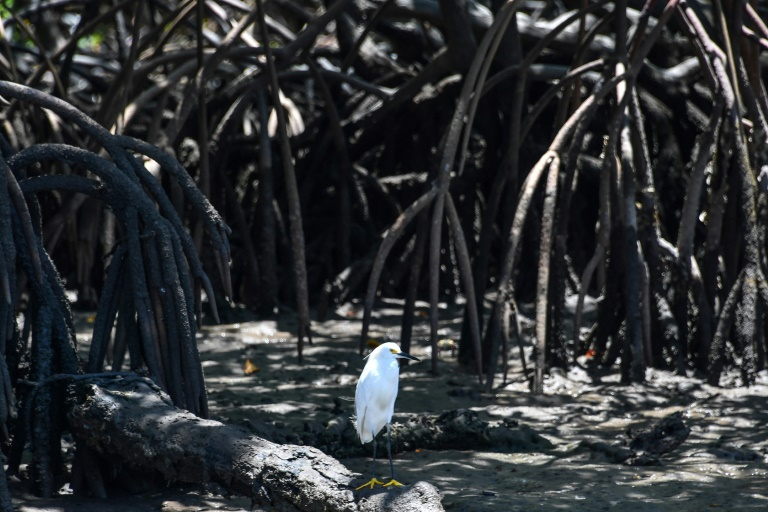 Environmentalists warn that rolling back regulations protecting Brazil's mangroves would open such lands up to development, with possibly catastrophic impact on their ecosystems.