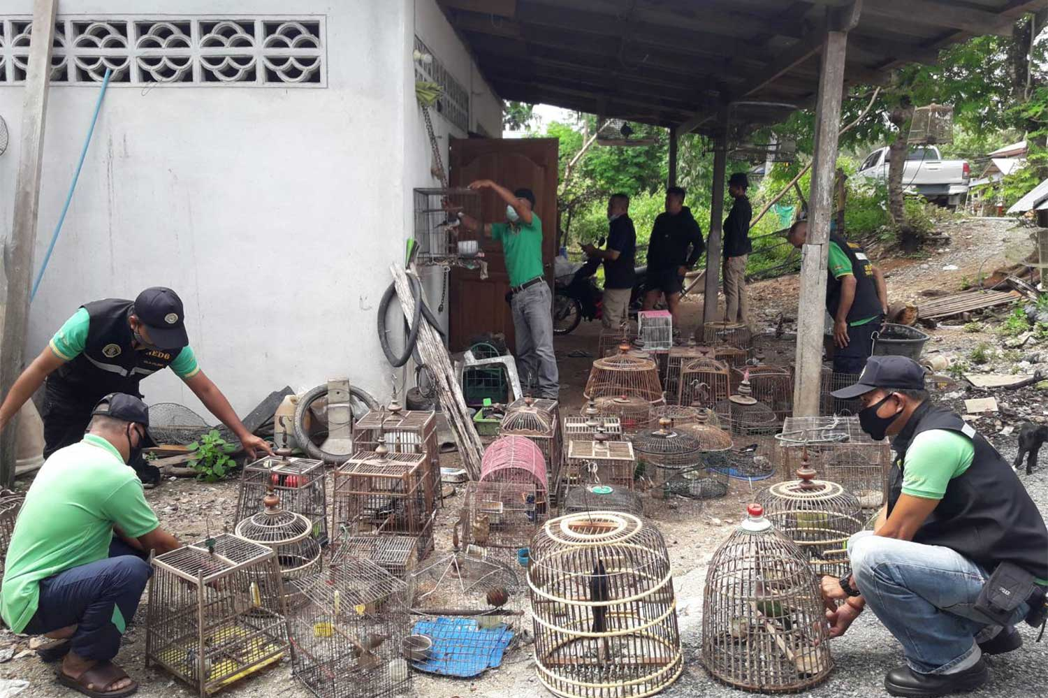 Officers from the Natural Resources and Environmental Crime Suppression Division inspect cages at a house in Rueso district of Narathiwat, where they said the owner was selling rare birds on Facebook. (Photo: Waedao Harai)