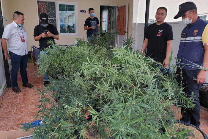 Argentinian caught growing cannabis