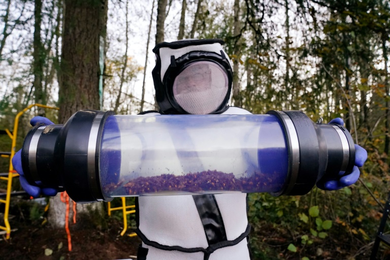 Sven Spichiger, Washington State Department of Agriculture managing entomologist, displays a canister of Asian giant hornets vacuumed from a nest in a tree in Blaine, Washington state, US.