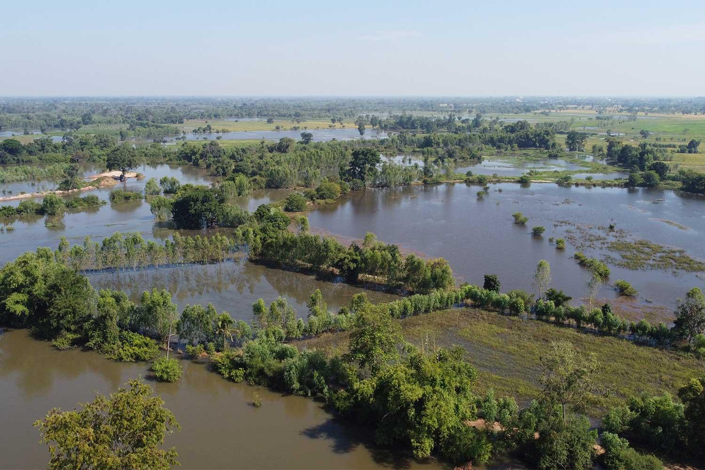 Flood-damaged paddy fields in Chum Phluang district, Nakhon Ratchasima. (Photo: Prasit Tangprasert