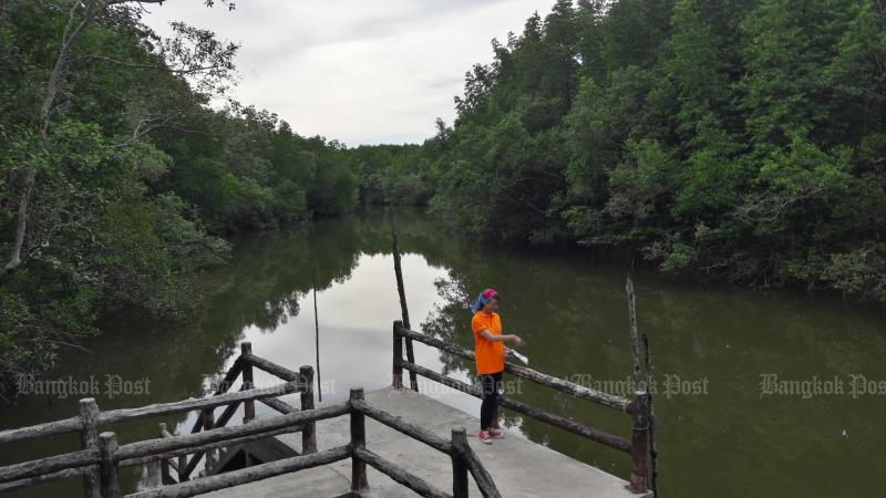 Landless villagers in Ranong will be given homes in a mangrove forest in exchange for helping conservation efforts under a deal that could become a model across the country.  (Bangkok Post file photo)