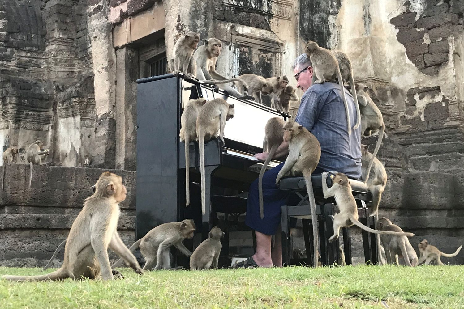British musician Paul Barton plays the piano for monkeys that occupy abandoned historical areas in Lop Buri province on Saturday. (Reuters photo)
