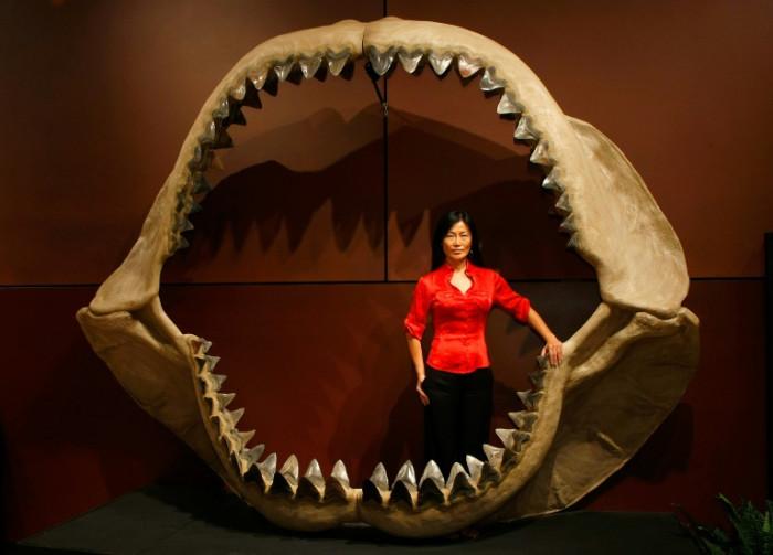 Prehistoric mega-shark raised young in nurseries, study finds - Bangkok Post
