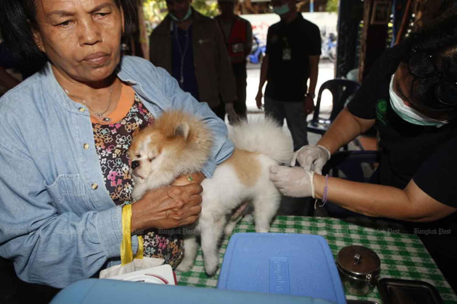 Govt rolls out plan to eradicate rabies