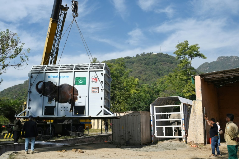 Mammoth move: loneliest elephant heads to Cambodia after Cher campaign