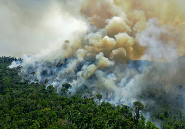 Deforestation in Amazon shoots up to 12-year high in 2020