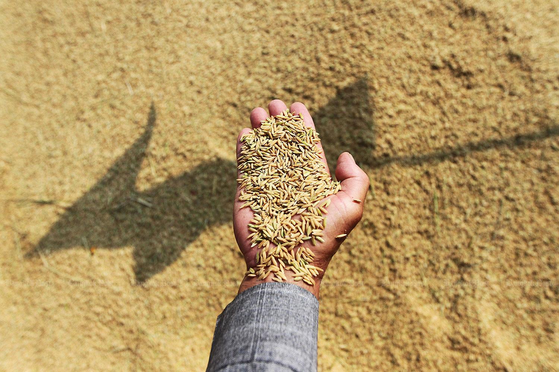 Thai Hom Mali fragrant rice voted 'world's best rice'. (Bangkok Post file photo)