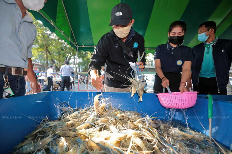 A shrimp fair is held at Kasetsart University's Bang Khen campus in Bangkok until Wednesday to help shrimp farmers in Suphan Buri, Chachoengsao and Ratchaburi provinces. (Photo by Chanat Katanyu)