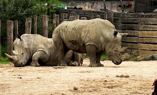 Paris zoo animals to see public again