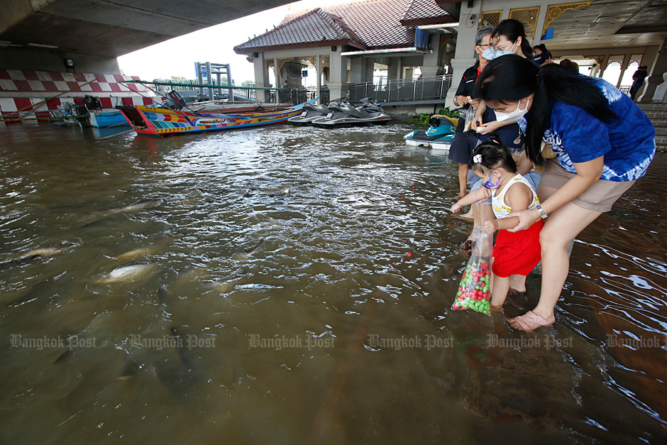 A family feeds fish in the Chao Phraya River which has flooded areas underneath the Pak Kret Bridge in Nonthaburi. (Photo by Apichit Jinakul)