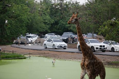Bangkok's biggest open zoo reopened -0