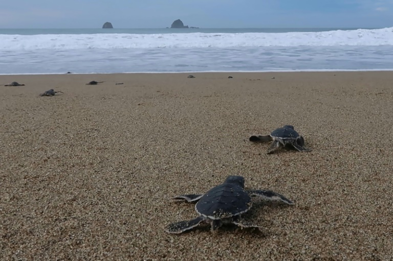 The shores of Mera Batiri National Park in Indonesia are nesting grounds for several species of turtle.