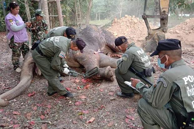 Officials examine the dead elephant before burying it, at  Kui Buri National Park headquarters in Prachuap Khiri Khan on Sunday. (Photo: Chaiwat Satyaem)