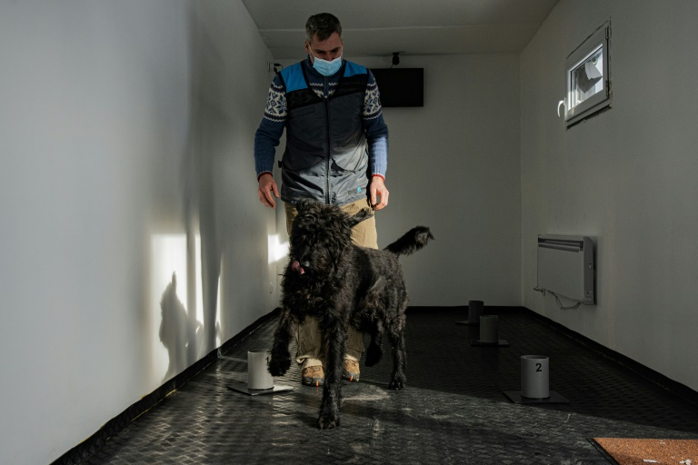 A team of Czech trainers say their Covid-19 detection dogs have a 95% success rate.