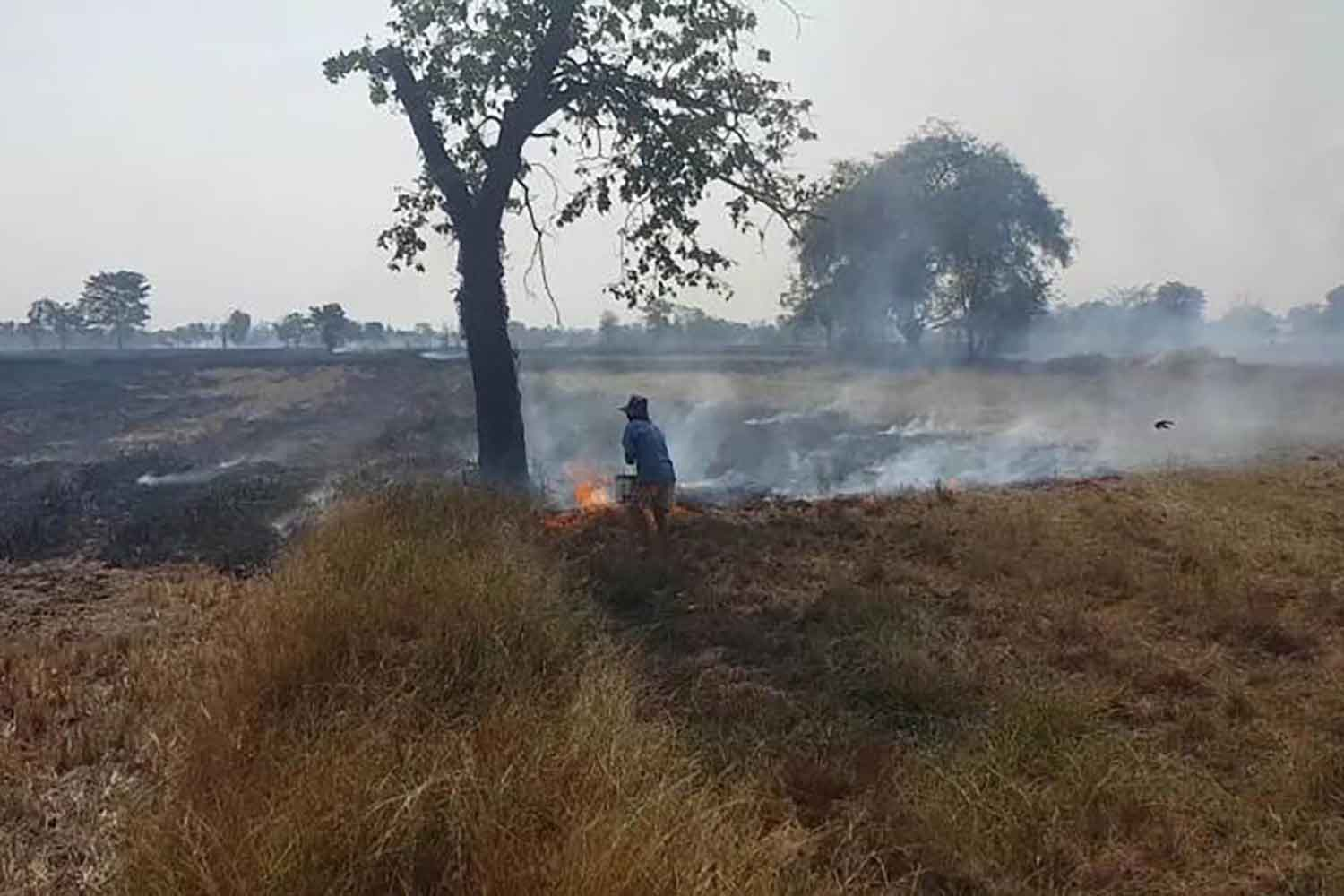 Waste burning in a paddy field in Nakhon Ratchasima (file photo)