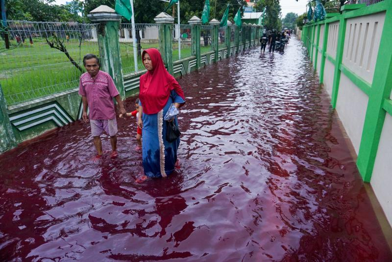 Residents wade through floodwaters dyed red from the waste of a batik factory, traditional textile product, in Pekalongan, central Java on Saturday. (AFP photo)