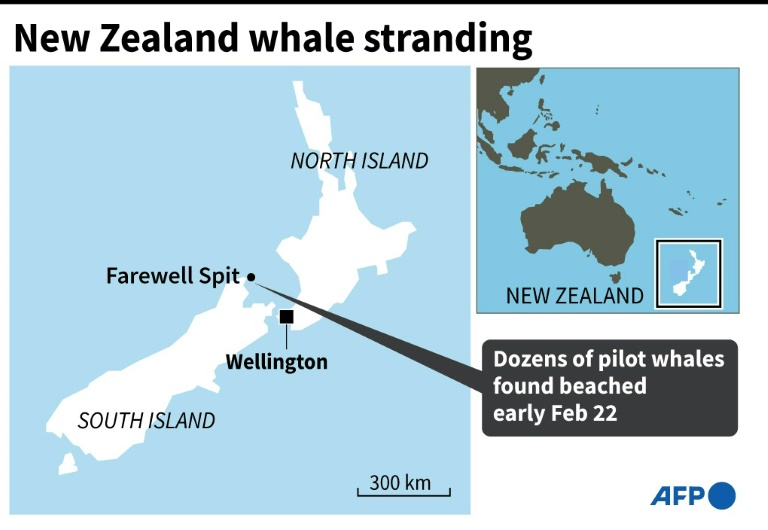 Map of New Zealand locating Farewell Spit where dozens of pilot whales were found beached early Monday.