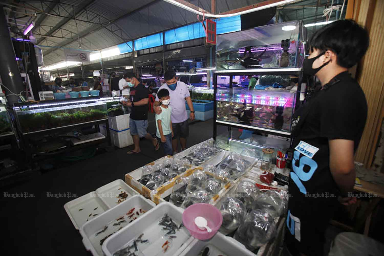 Customers visit pet shops at Chatuchak market in Bangkok last month. (Photo by Nutthawat Wicheanbut)