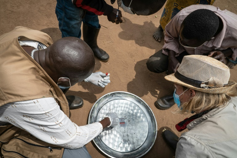 An expert team inspects flea traps, set up to confirm whether or not the insects are carrying the plague