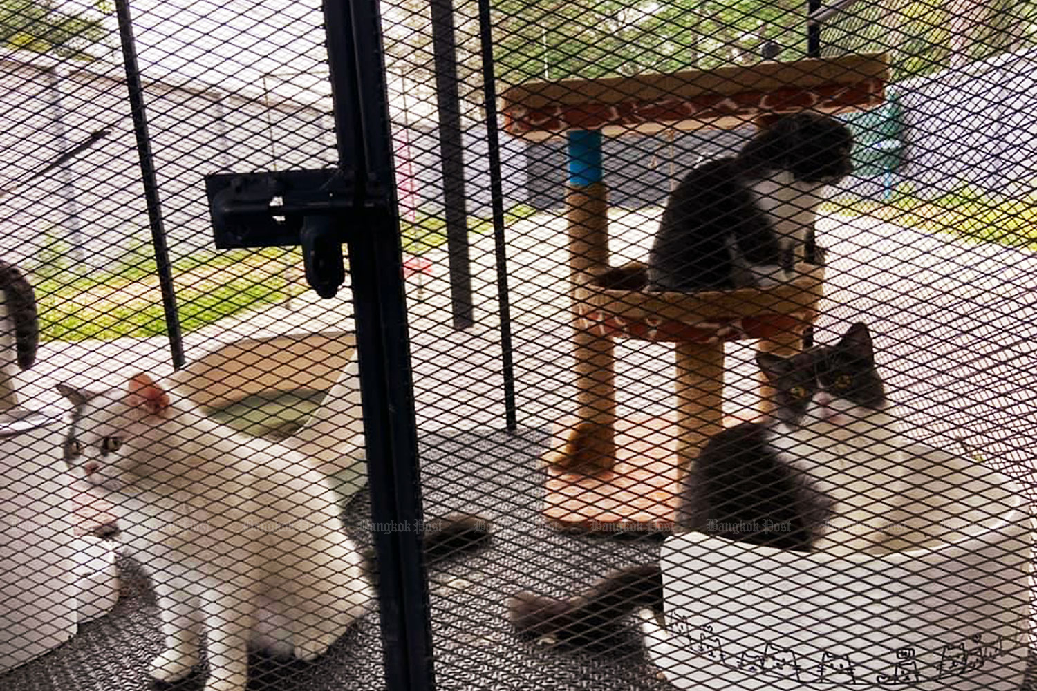 Cats are found at the house of a suspect belonging to a drug network controlled by an individual known as
