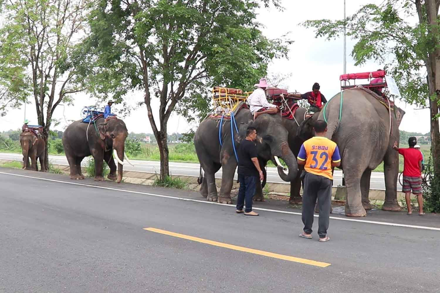 Five unemployed elephants and their owners begin walking from Pattaya to their native province of Surin, in tambon Nong Prue of Bang Lamung district, Chon Buri, on Tuesday.