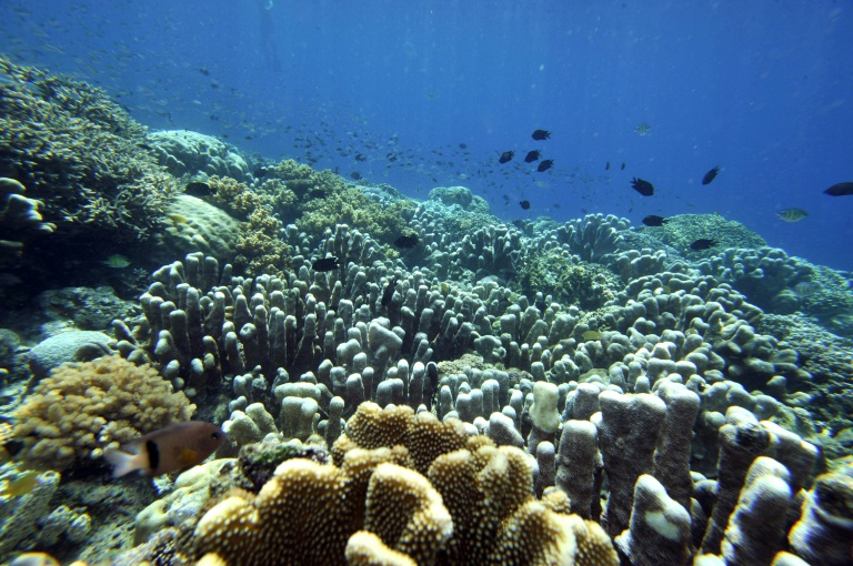 Marine life in tropical waters declines when annual average sea temperature rises above 20-25 degrees Celsius.