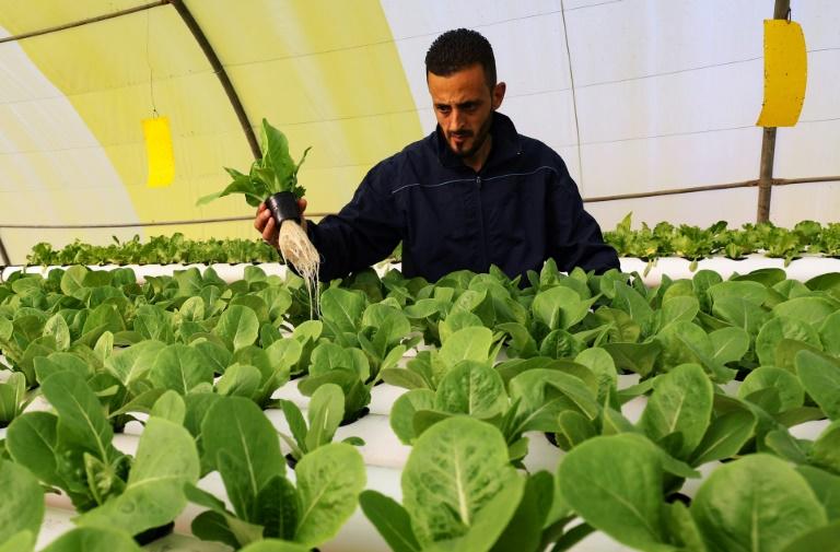 'Green Paradise' brings hydroponics to Libya