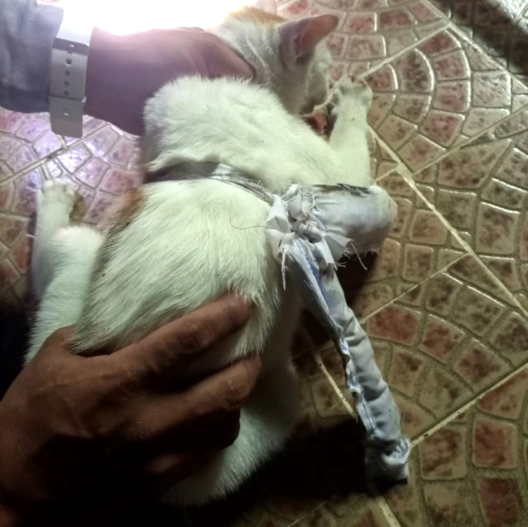 'Narcocat' caught delivering drugs to Panama prison