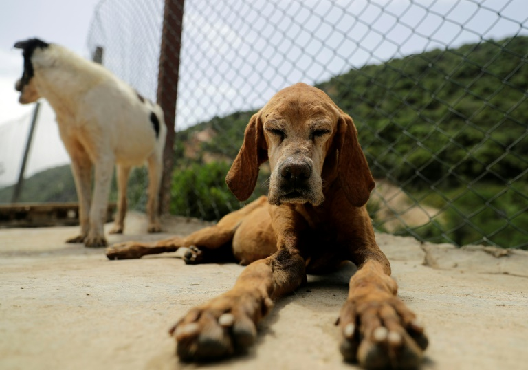 As poverty bites, Lebanese give up their pets