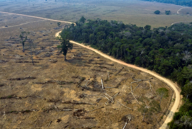 Brazil deforestation 94% illegal: report