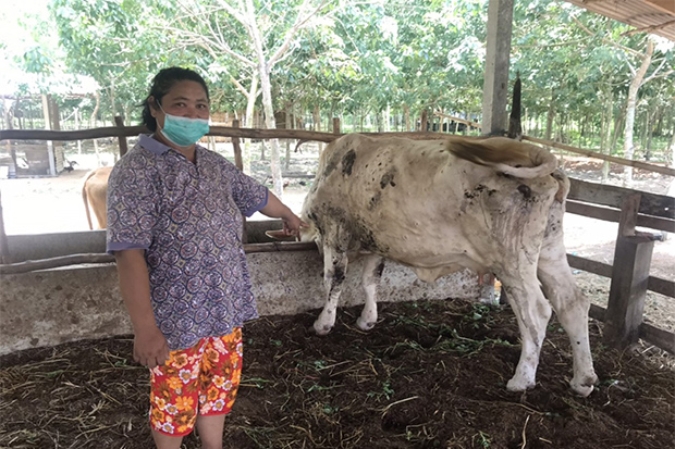 Farmer Boonkwang Kailoon displays one of her cows infected with lumpy skin disease at her farm in Na Kae district of Nakhon Phanom on Sunday. (Photo by Pattanapong Sripiachai)