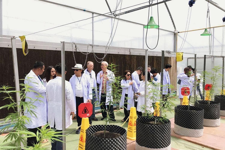 Than Global Travel has been offering educational cannabis tours at the Rajamangala University of Technology Isan, Sakon Nakhon Campus.