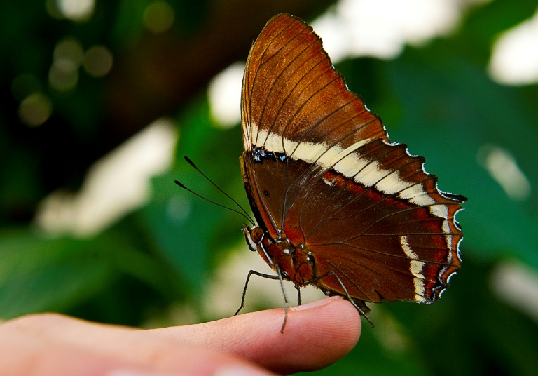 Colombia has the world's largest variety of butterfly species