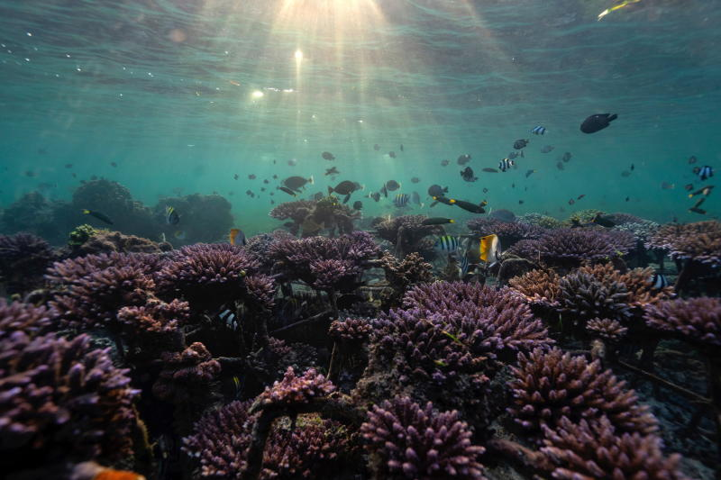 Fish swim at a coral reef garden in Nusa Dua, Bali, Indonesia, May 28, 2021. (Reuters file photo)