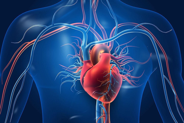 Heart Disease – Can it be reversed?