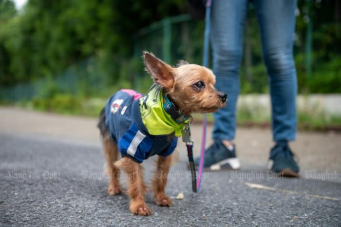 Tokyo's Paw Patrol keeps an eye on crime