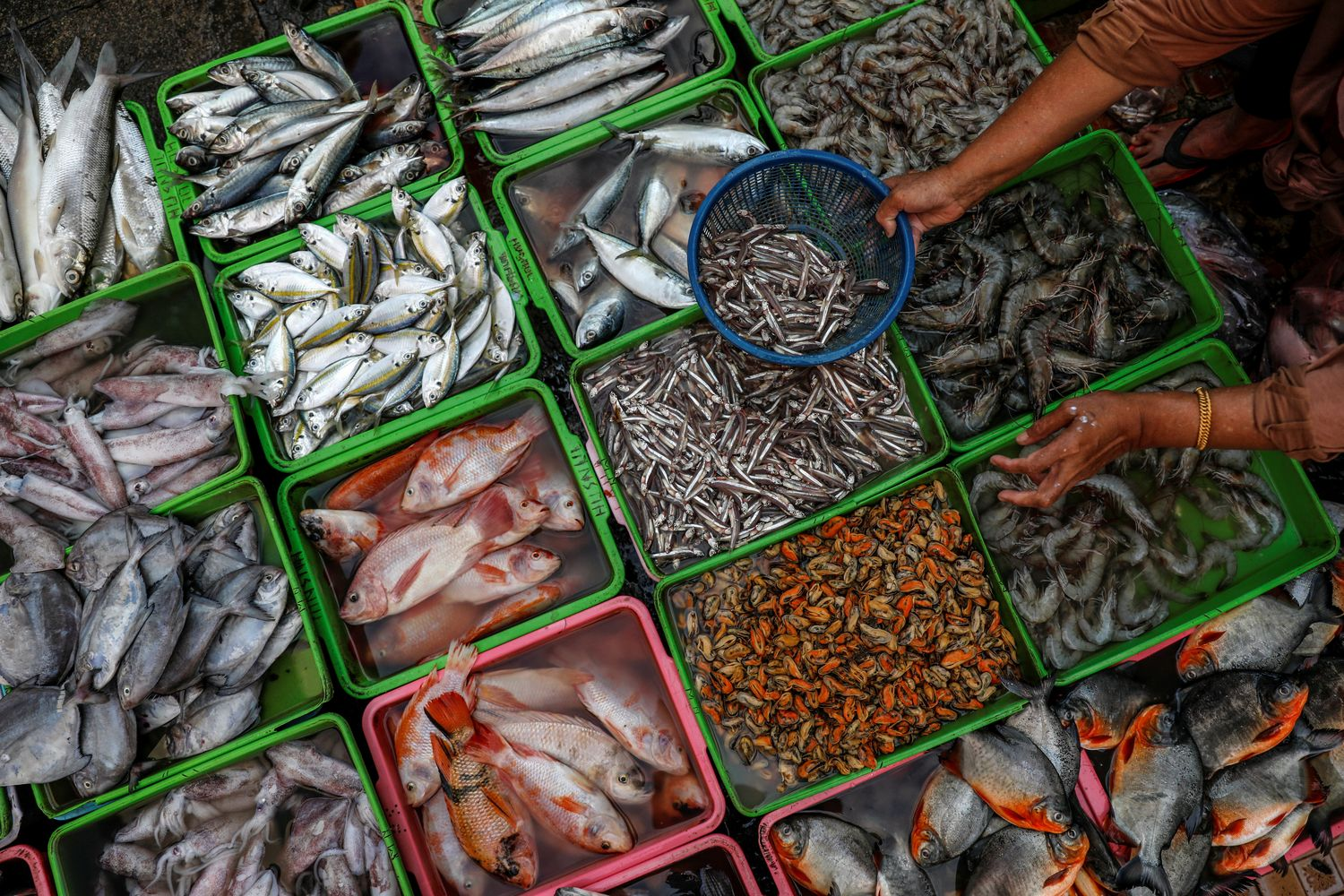 A vendor selling seafood prepares fish as she serves her customers at a traditional market in Jakarta, Indonesia, on March 1 this year. (Reuters photo)