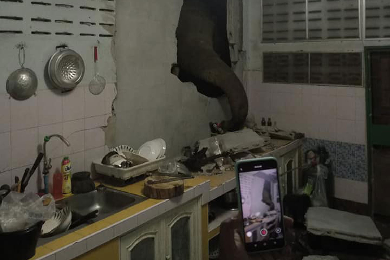 Wild elephant revisits Hua Hin family