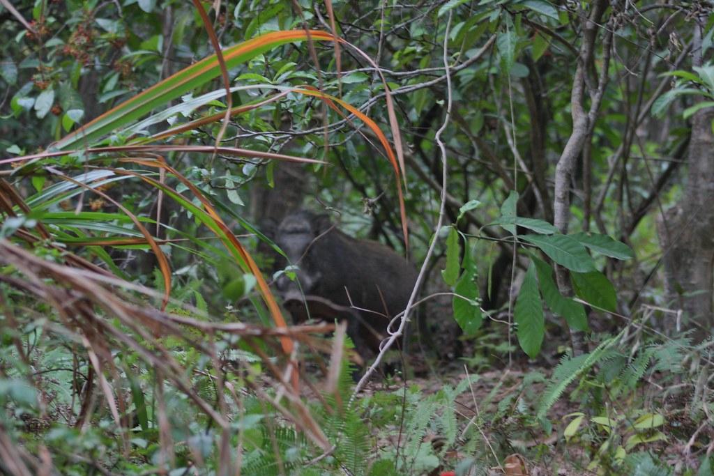 Wild boar bites picture-taking Hong Kong hiker