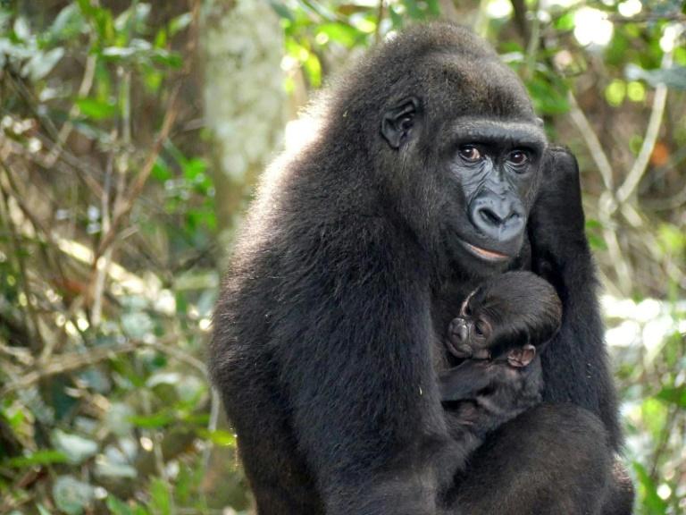 UNESCO awards Gabon's Ivindo park World Heritage status