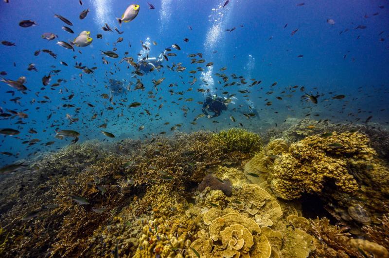 Govt bans coral-damaging sunscreens
