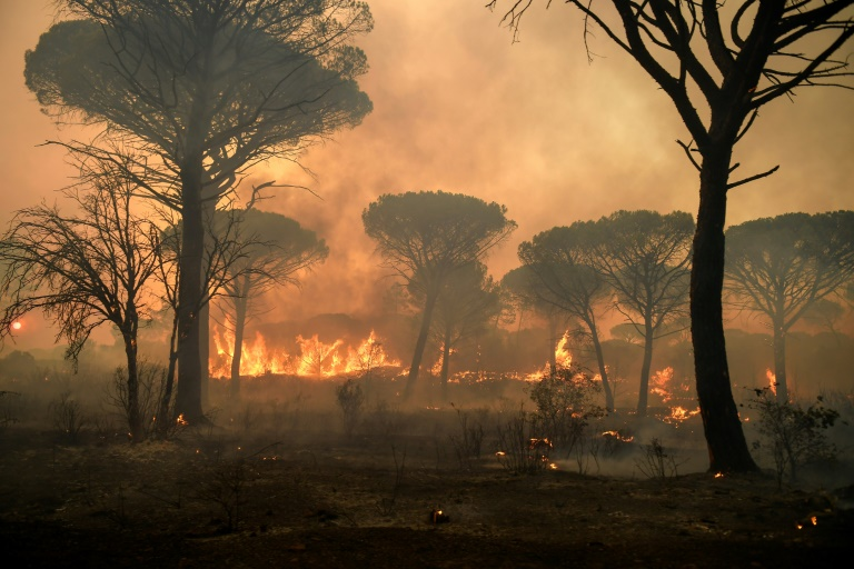 The blaze has scorched some 5,000 hectares in a region known for its forests and vineyards.
