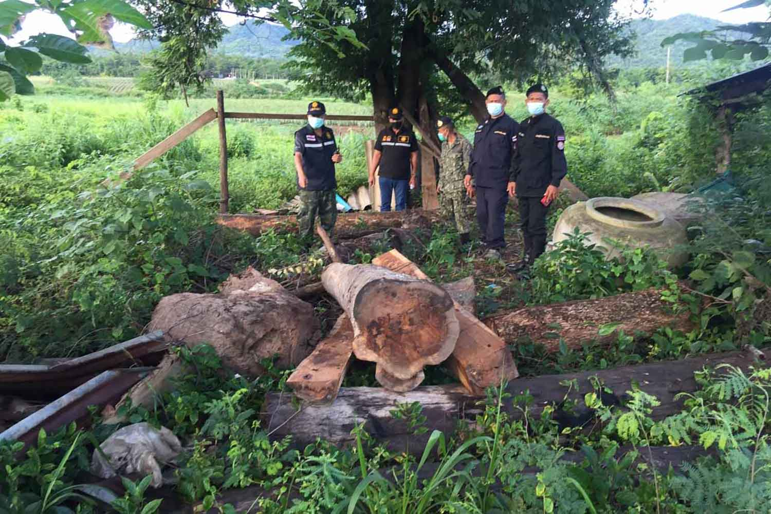 Some of the illegally cut logs seized at a forest temple in Kanchanaburi's Sai Yok district on Monday. A suspect was arrested. (Photo: Piyarat Chongcharoen)