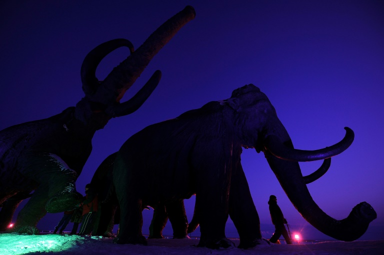 Woolly mammoths may yet walk the Arctic again, if biosciences firm Colossal is able to use gene-editing techniques to bring back the extinct species.