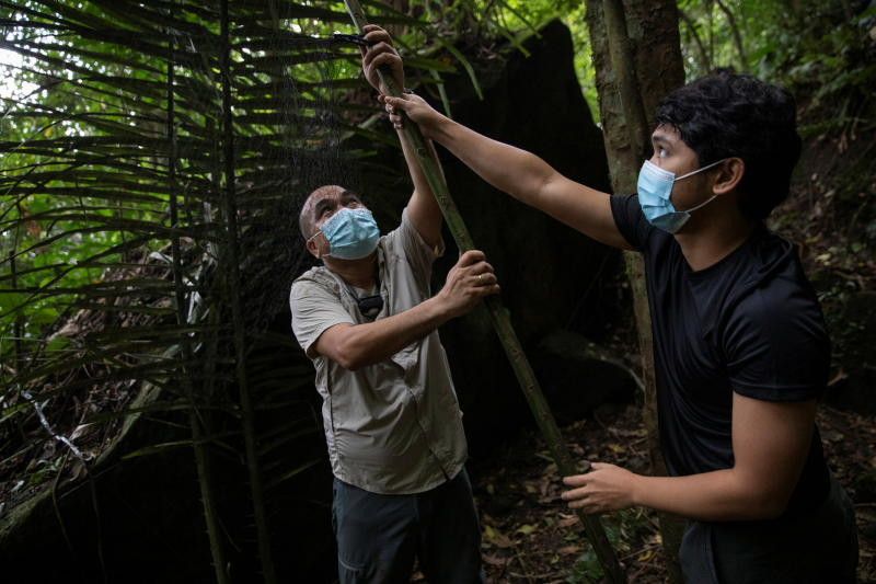 Filipino bat ecologists Phillip Alviola and Kirk Taray set up a mist net near a bat roost at Mount Makiling in Los Banos, Laguna province, Philippines, Feb 18, 2021.  An average 400,000 wildlife-to-human spillover events occur annually, largely driven by the wildlife trade. (Reuters file photo)