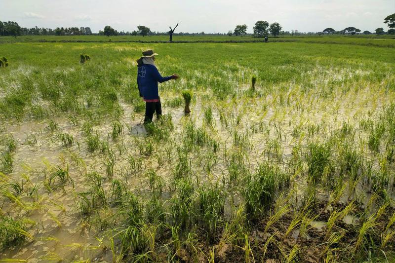 Rice set to climb as fertiliser rally drives up farm costs